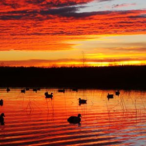 Decoys at Lake Erie Sunrise
