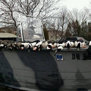 ducks-lake-erie-diver-duck-hunting